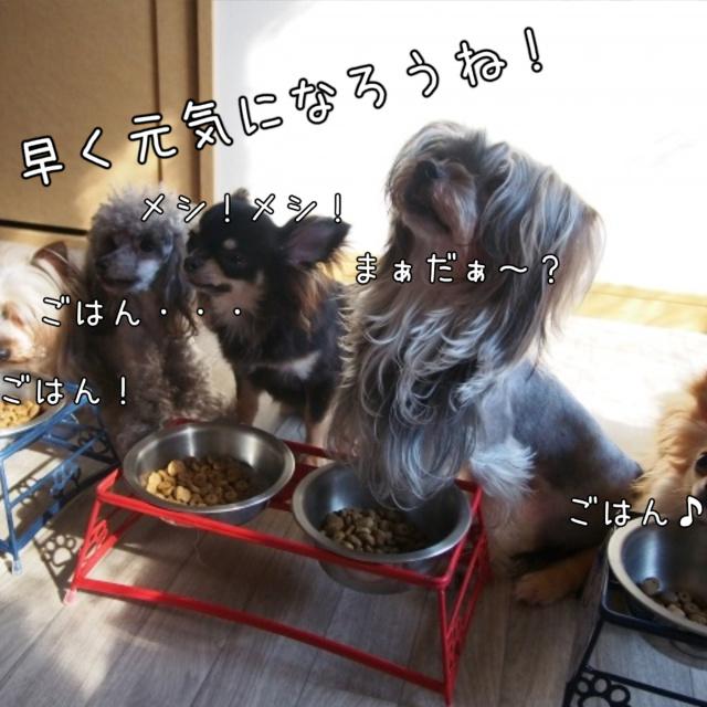 犬の尿毒症