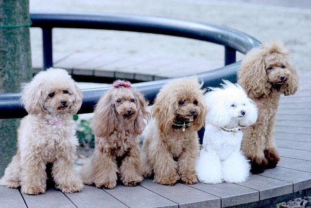 かみ癖や無駄吠え癖のある犬をしつける効果的なトレーニング